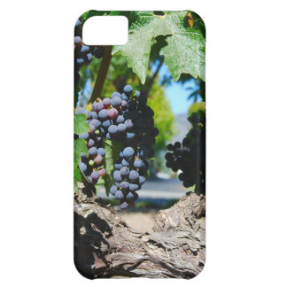 Vineyard Grapes on Napa Vines iPhone 5C Case