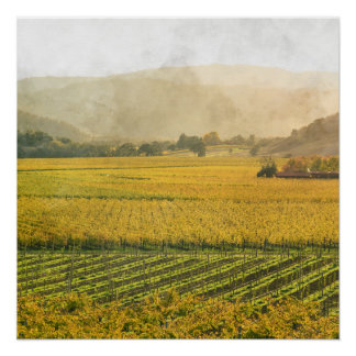 Vineyard in Autumn in Napa Valley California