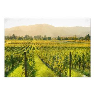 Vineyard in Autumn in Napa Valley California Art Photo