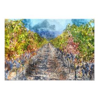 Vineyard in Autumn in Napa Valley California Photo Print