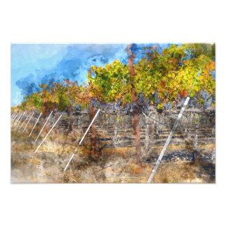 Vineyard in Autumn in Napa Valley California Photograph