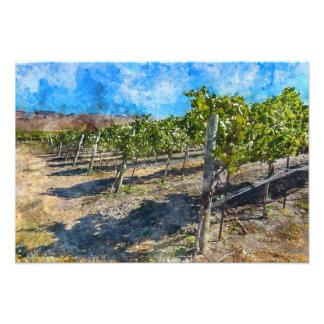 Vineyard in Napa Valley California Art Photo