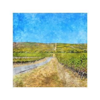 Vineyard in Napa Valley California Canvas Print