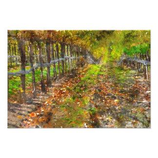 Vineyard in Napa Valley California Photo Print