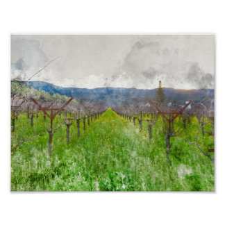Vineyard in Napa Valley California Poster