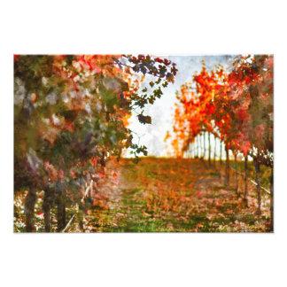 Vineyard in Napa Valley during Fall Photo Print