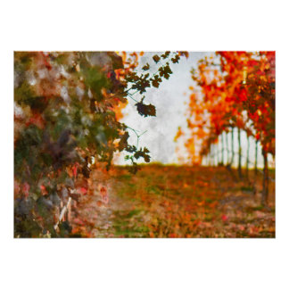 Vineyard in Napa Valley during Fall Poster