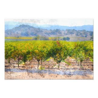 Vineyard in Napa Valley Photo Print