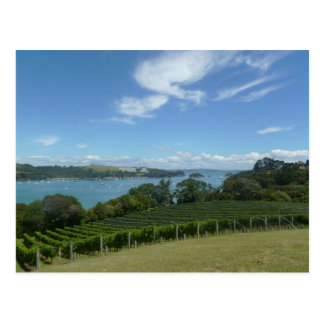 Vineyard in New Zealand Postcard