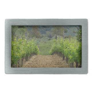 Vineyard in spring . Tuscany, Italy Belt Buckle
