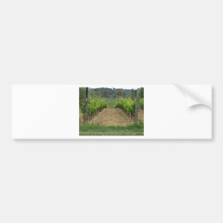 Vineyard in spring . Tuscany, Italy Bumper Sticker