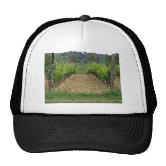 Vineyard in spring . Tuscany, Italy Cap