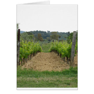 Vineyard in spring . Tuscany, Italy Card