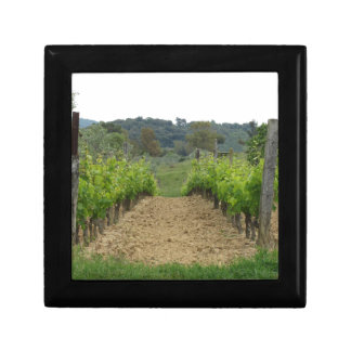 Vineyard in spring . Tuscany, Italy Gift Box