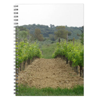 Vineyard in spring . Tuscany, Italy Notebook