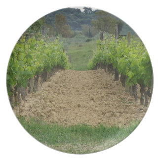 Vineyard in spring . Tuscany, Italy Plate