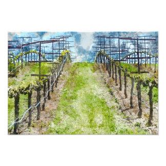 Vineyard in the Spring Photo Print