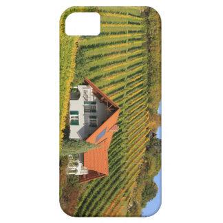 Vineyard landscape iPhone 5 covers