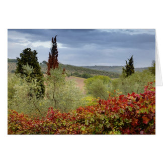 Vineyard near Montalcino, Tuscany, Italy Card