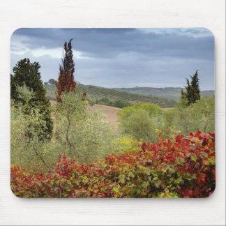 Vineyard near Montalcino, Tuscany, Italy Mouse Pad
