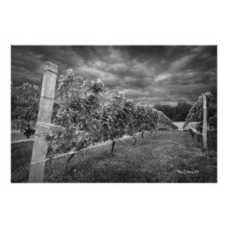Vineyard Art Photo