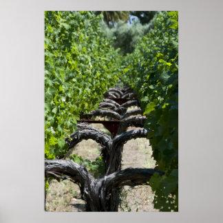 Vineyard Row of Grapes Poster