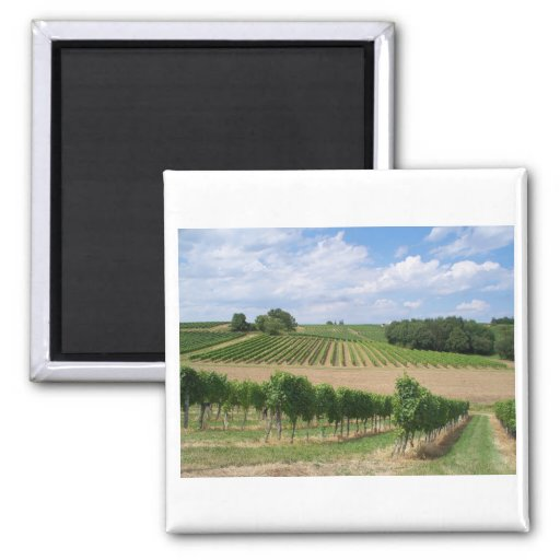 Vineyard - Vineyard (Bordeaux - France) 04 Fridge Magnets