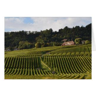 Vineyards at dusk card