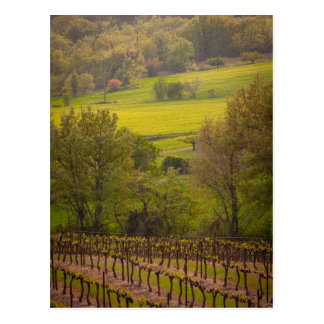 vineyards in France Postcard