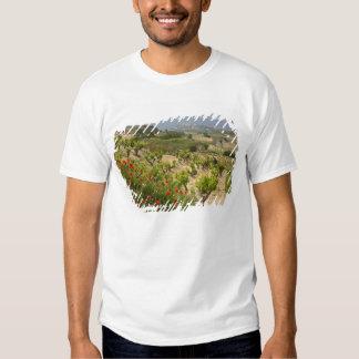 Vineyards near Laguardia, capital of La Rioja T-shirt