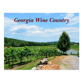 Vineyards of Georgia, USA Postcard