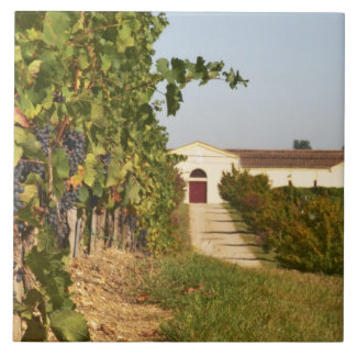 Vineyards, petit verdot vines and the winery in large square tile
