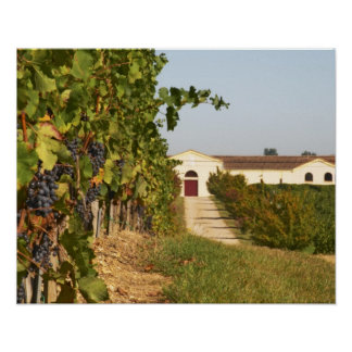 Vineyards, petit verdot vines and the winery in poster