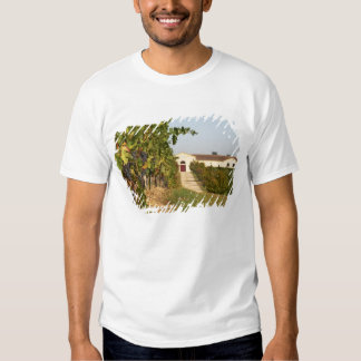 Vineyards, petit verdot vines and the winery in shirts