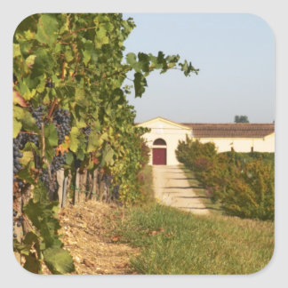 Vineyards, petit verdot vines and the winery in square sticker