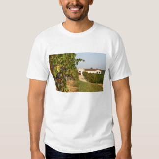 Vineyards, petit verdot vines and the winery in tshirts