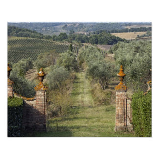 Vineyards, Tuscany, Italy Poster