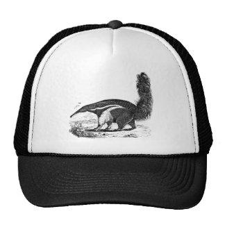 Vintage 1800s Aardvark Retro Ant Eater Template Cap