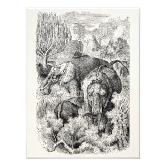 Vintage 1800s African Elephant - Elephants Photo Print