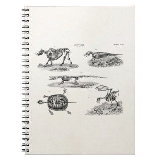 Vintage 1800s Animal Skeletons Antique Anatomy Notebooks