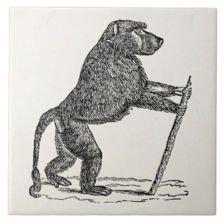 Vintage 1800s Baboon Walking Stick Monkey Baboons Large Square Tile