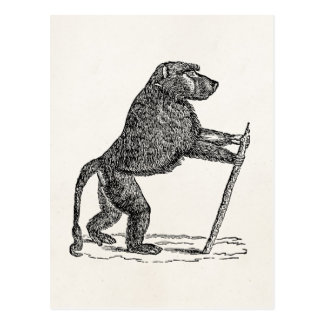 Vintage 1800s Baboon Walking Stick Monkey Baboons Postcard