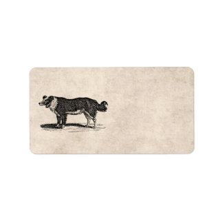 Vintage 1800s Border Collie Dog Illustration Address Label
