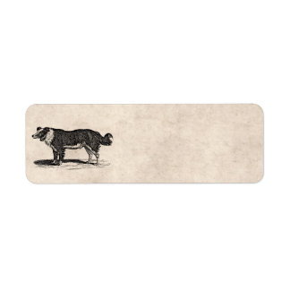 Vintage 1800s Border Collie Dog Illustration Return Address Label