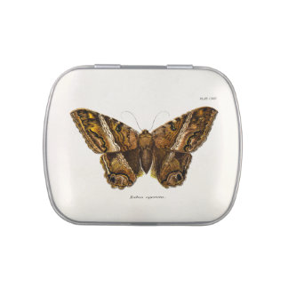 Vintage 1800s Brown Fuzzy Moth Template Butterfly Jelly Belly Candy Tins