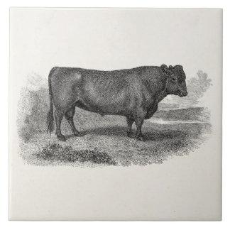 Vintage 1800s Bull Illustration Retro Cow Bulls Large Square Tile
