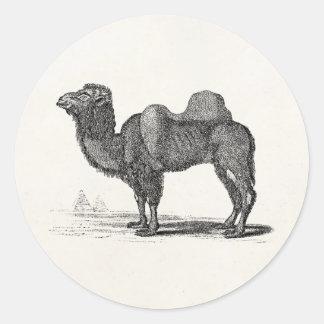 Vintage 1800s Camel Illustration -  Camels Classic Round Sticker