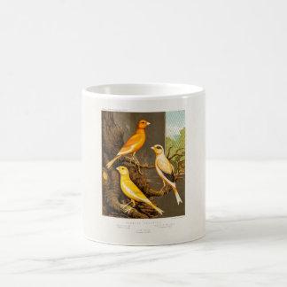 Vintage 1800s Canary Song Bird Template Canaries Coffee Mug