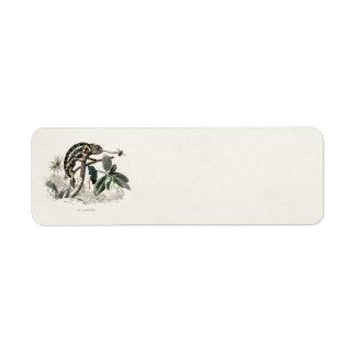 Vintage 1800s Chameleon Lizard Retro Chameleons Return Address Label