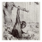 Vintage 1800s Chimpanzee Rabbit Monkey Bunny Chimp Poster